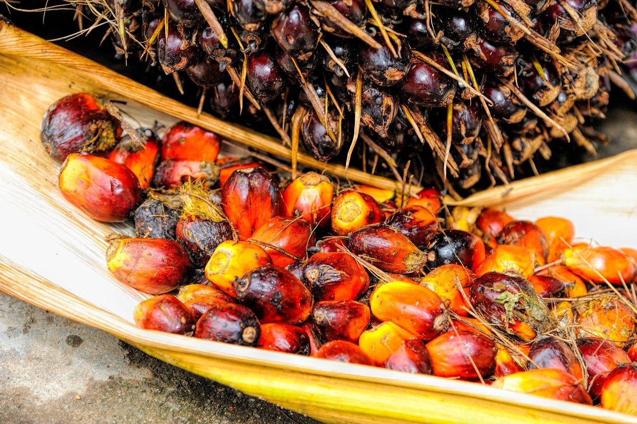 Co to jest olej palmowy?